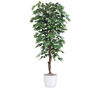 Ficus Benjamini 180 cm (1.008 blade)