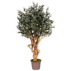 Oliventræer