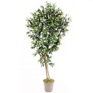 Oliventræ 150 cm (1.536 blade)