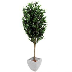 Oliventræ 250 cm (3.968 blade)