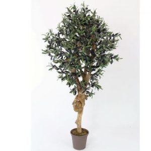 200 cm oliventræ