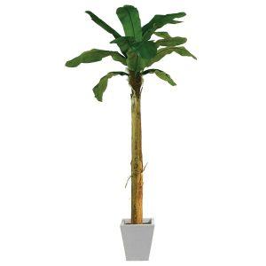 Bananpalme 270 cm med 13 blade